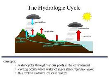 Chapter 6: Biogeochemical Cycles! - AP Environmental Science!